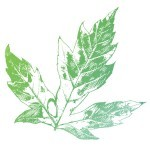 Nature-to-Nurture-Leaf-Icon-3
