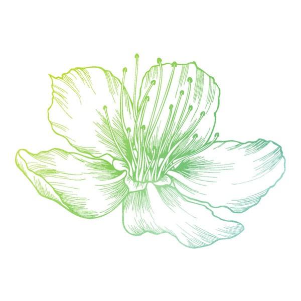 Aromatherapy - Nature to Nurture - Aromatherapy Massage in Hemel & St Albans