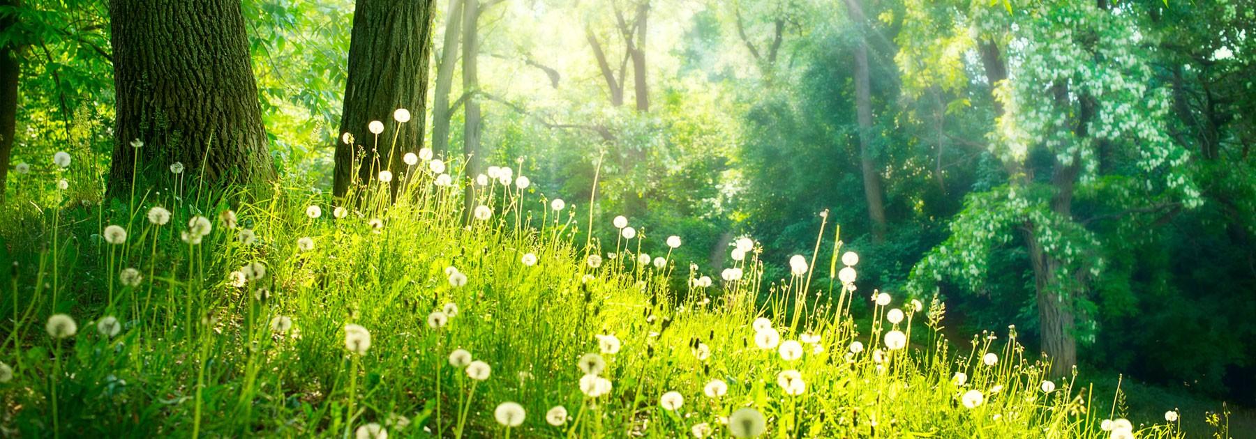 Spring Nature Beautiful Lands - Banner - Nature To Nurture ...